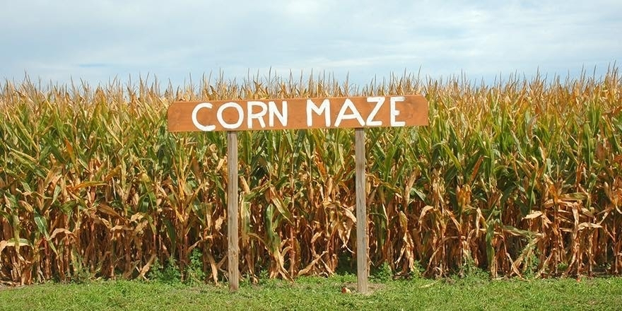 Corn Maze in Lowry City